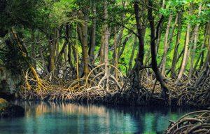 ekositem-hutan-mangrove